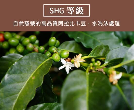 Macintosh HD:Users:Mac:Desktop:咖啡豆:宏都拉斯:宏都拉斯_03.jpg