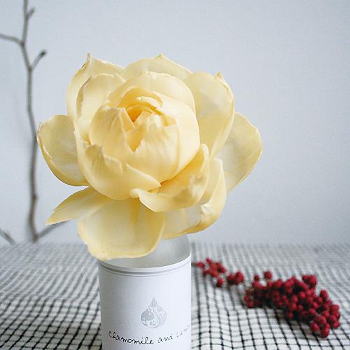 Art Lab 香氛實驗室 索拉花 Sola Flower 索拉樹 Pattern Safari 狩獵隊雜貨 補充 香氛花 瓶中花